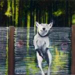 Hund vor Zaun